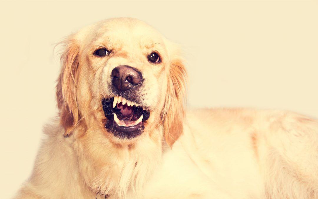¿tu perro es un poco rebelde?