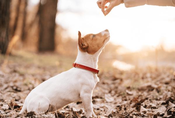 Adiestramiento canino Vigo