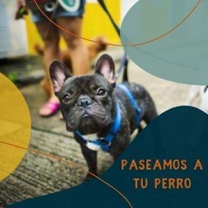 PASEOS PERRO VIGO